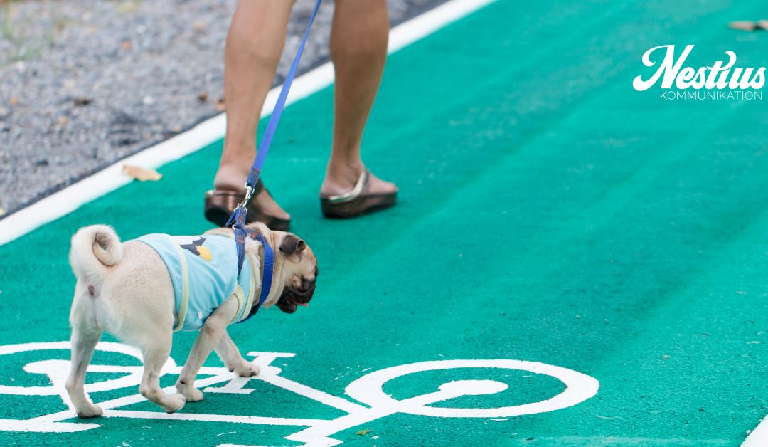 en liten fransk bulldog genar över cykelvägen - jag har tipsen för att spara tid på sociala medier